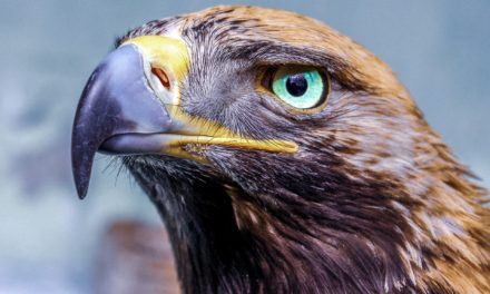 Eagle Symbol and Meaning