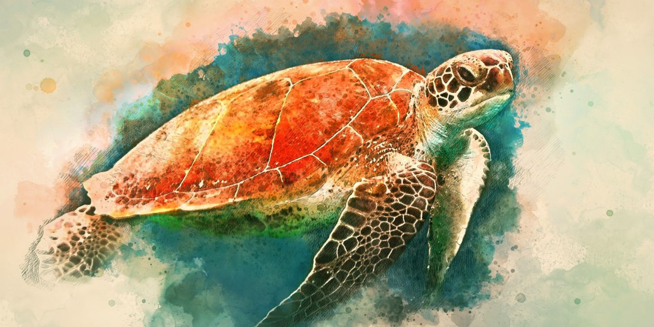 Turtle – Symbol and Meaning