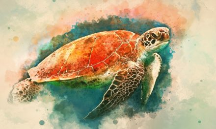 Turtle Symbolism – What it Represents from Christianity to Hinduism